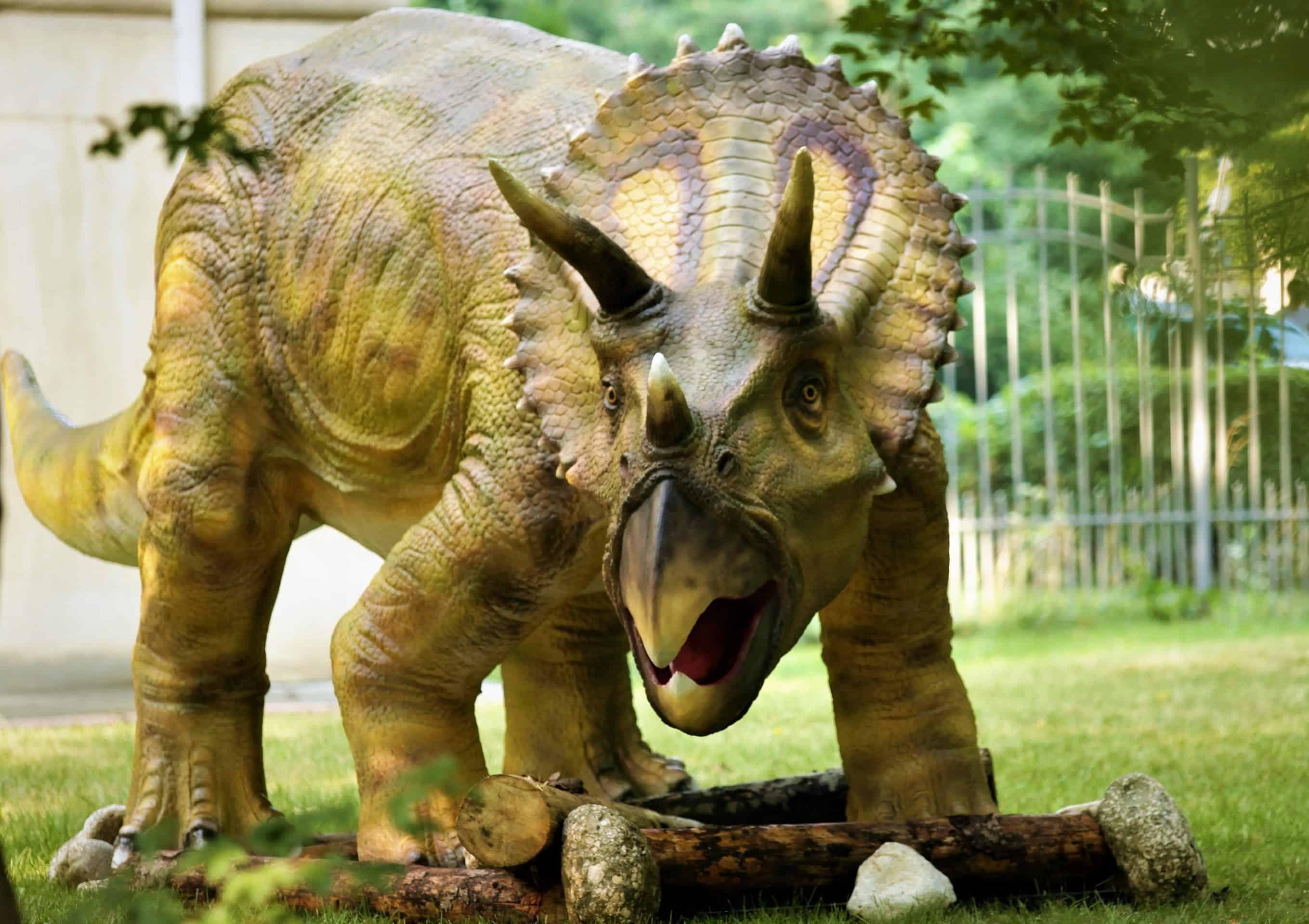 Triceratops-Muzeul-de-Geologie
